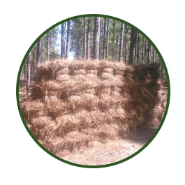 Bales of Pine Needles